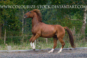 Standardbred 2 by Colourize-Stock