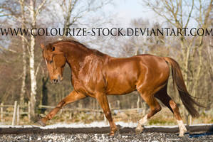 Standardbred 4 by Colourize-Stock
