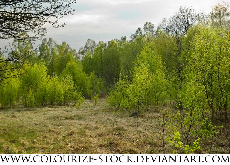 Landscape Stock 34