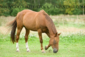 Standardbred 7 by Colourize-Stock