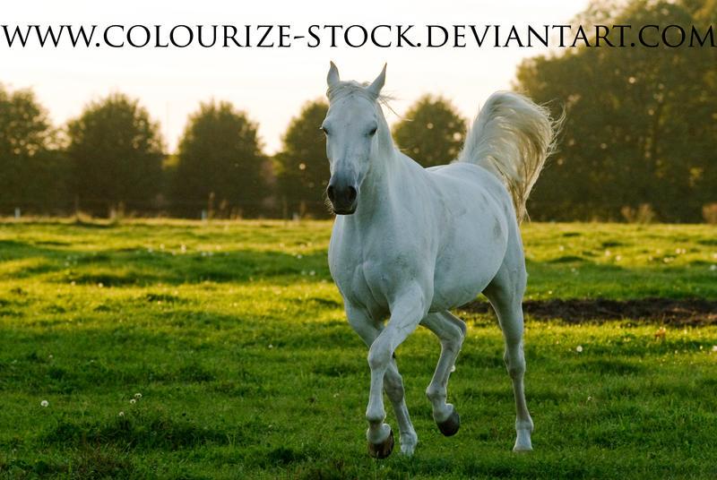Ficha de Riley. Grey_Mare_Stock_2_by_Colourize_Stock