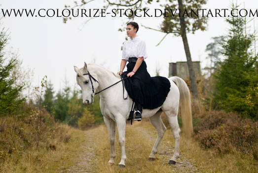 Horse and Rider Stock