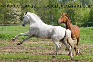 Grey Mare 9 by Colourize-Stock