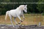 Grey mare 12