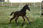 WB Filly 3