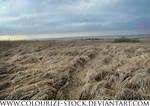 Landscape Stock 56