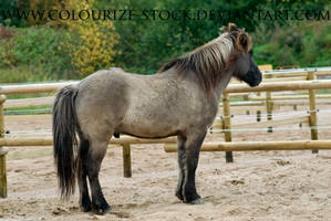 Iceladic Horse 2 by Colourize-Stock