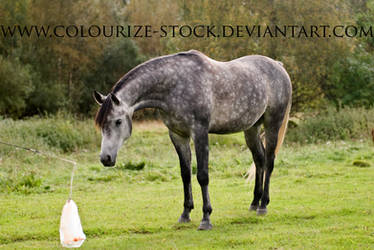 Itz 32 by Colourize-Stock