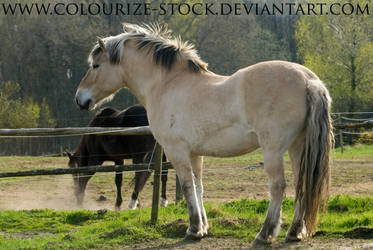 Fjord Stock 16 by Colourize-Stock
