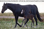 Mare and Foal Stock 2