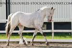 Spotted horse stock 1