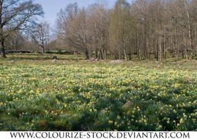 Landscape Stock 69 by Colourize-Stock