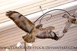 Bird Stock 19