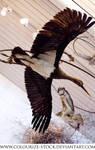 Bird Stock 20