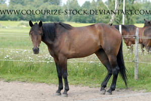 Standardbred 18 by Colourize-Stock
