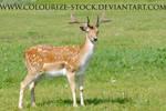 Deer Stock 1