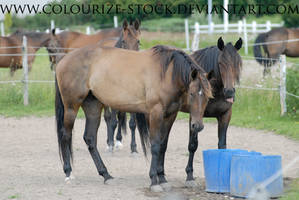 Standardbred 19 by Colourize-Stock