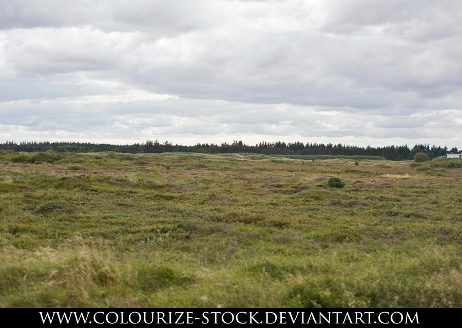 Landscape Stock 74