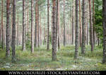 Landscape Stock 78