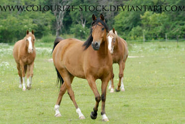 Arabian 24 by Colourize-Stock