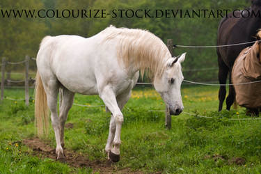 Grey Mare 25 by Colourize-Stock