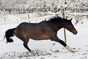 Warmblood 35 by Colourize-Stock