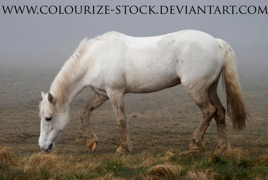 Grey Pony stock by Colourize-Stock