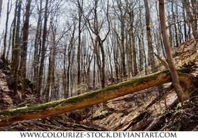 Landscape Stock 94 by Colourize-Stock