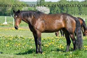 Standardbred 24 by Colourize-Stock