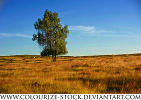 Landscape Stock 95 by Colourize-Stock