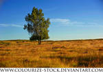 Landscape Stock 95