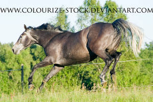 Warmblood 46 by Colourize-Stock
