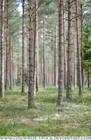 Landscape 100 by Colourize-Stock