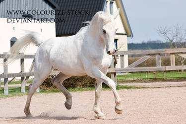 Arabian 40 by Colourize-Stock