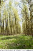 Landscape Stock 107 by Colourize-Stock