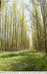 Landscape Stock 107