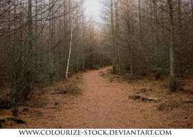 Landscape Stock 110 by Colourize-Stock