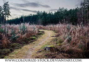 Landscape Stock 115 by Colourize-Stock