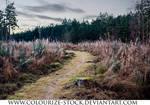 Landscape Stock 115