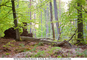 Landscape Stock 137 by Colourize-Stock