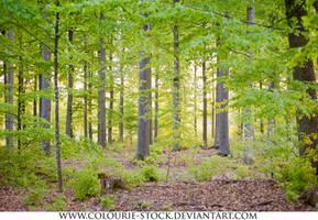 Landscape Stock 138 by Colourize-Stock