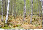Landscape Stock 146
