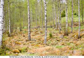Landscape Stock 147 by Colourize-Stock