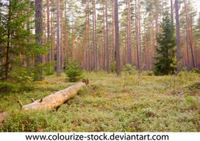 Landscape Stock 169 by Colourize-Stock