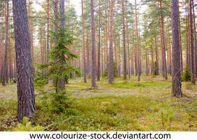 Landscape Stock 172 by Colourize-Stock