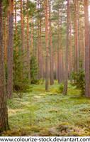Landscape Stock 175 by Colourize-Stock