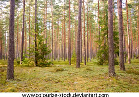 Landscape Stock 176 by Colourize-Stock