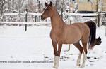 Arabian 48