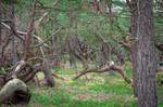 Landscape 183