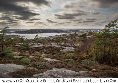 Landscape Stock 202